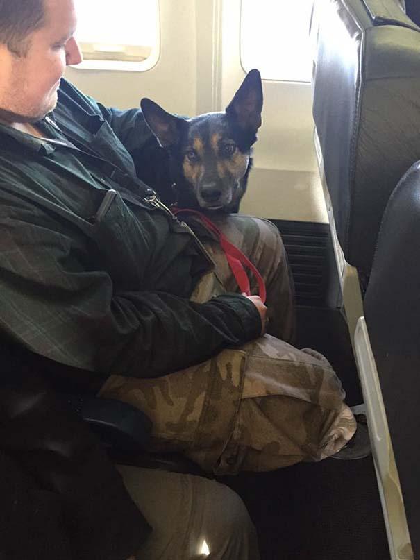 Los animales de compañia viajan en la cabina del avion