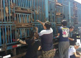 Lucharon durante 3 dias para salvar perros destinados al festival de Yulin