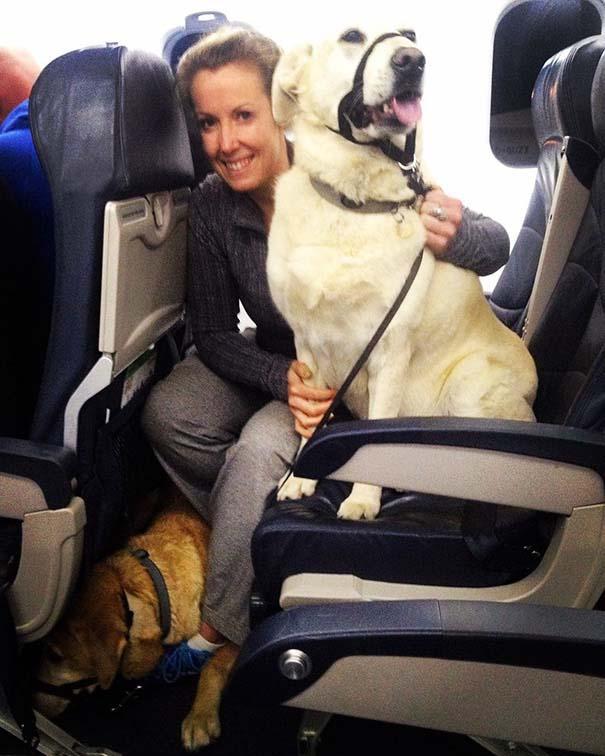 Mascotas viajan en la cabina del avion