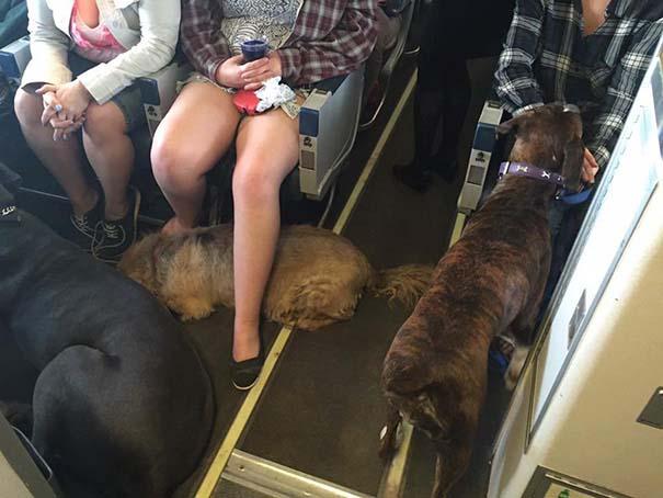 Mascotas viajan en la cabina