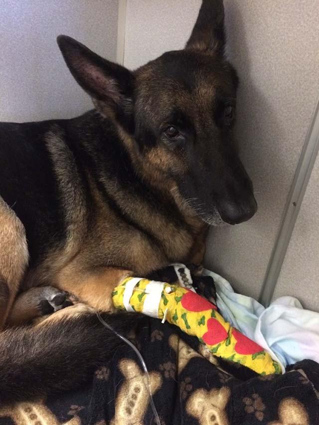 Maxx ayudó a los bomberos para salvar a su familia