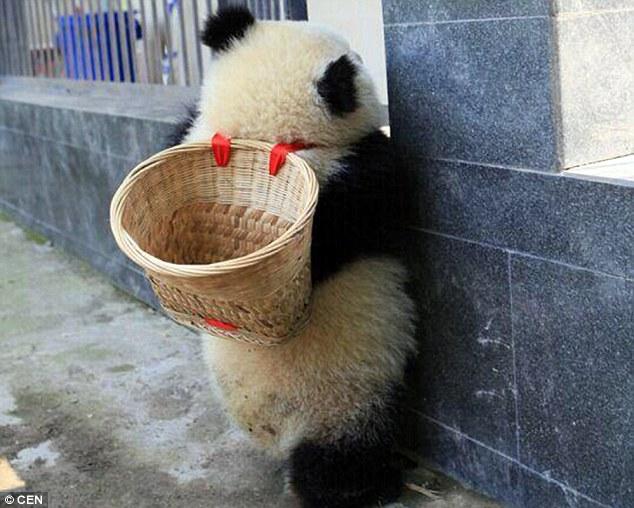 Oso panda con una canasta