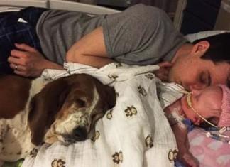 Perro acompañó a su pequeña humana enferma hasta el fin