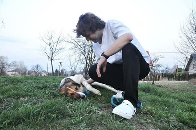 Perro en recuperación