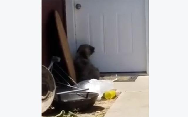 Perro llora en la puerta luego de que su familia se mudara