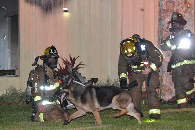 Perro salvó a su familia ayudando a los bomberos