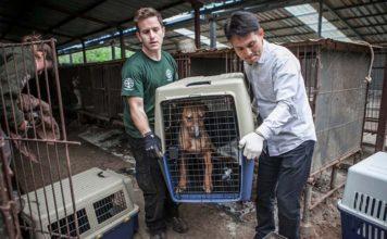Perros rescatado de una granja de carne de perro