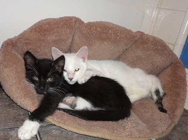 Pretzel y su amigo