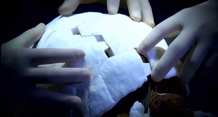 Primer caparazon impreso en 3D