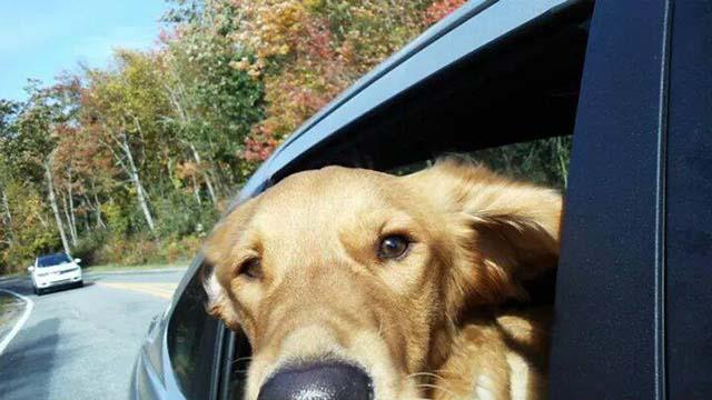 Riley de paseo en auto