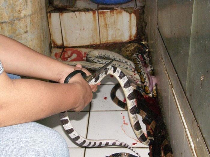 Serpientes para marroquinería