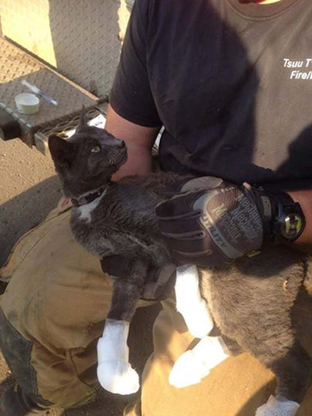 Tux se salvo de un incendio