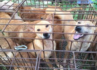 20 perros rescatados un día antes de ser sacrificados en Yulin