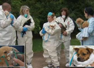 276 perros rescatados de una pareja de acumuladores