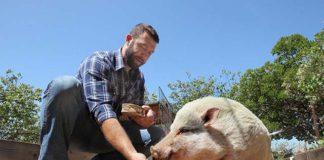 Abogado convirtio su hogar en un santuario para animales rescatados