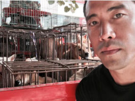 Activista salvó a 1000 perros de ser comidos en el festival de Yulin
