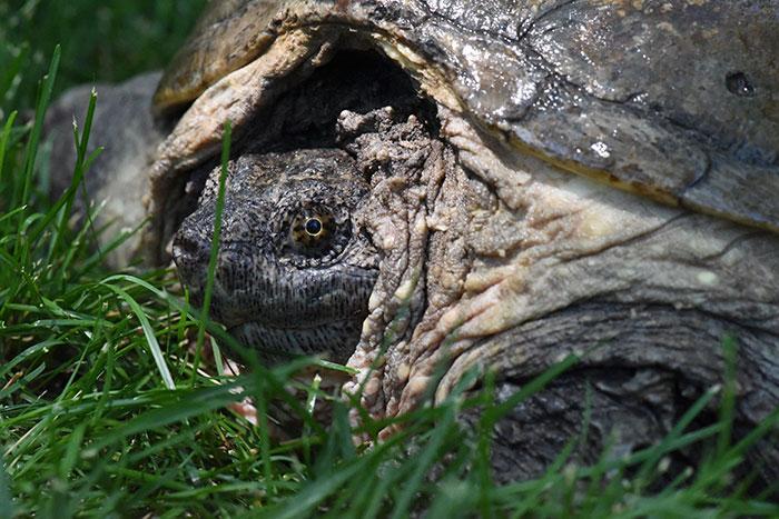 Atacan tortuga con un destornillador