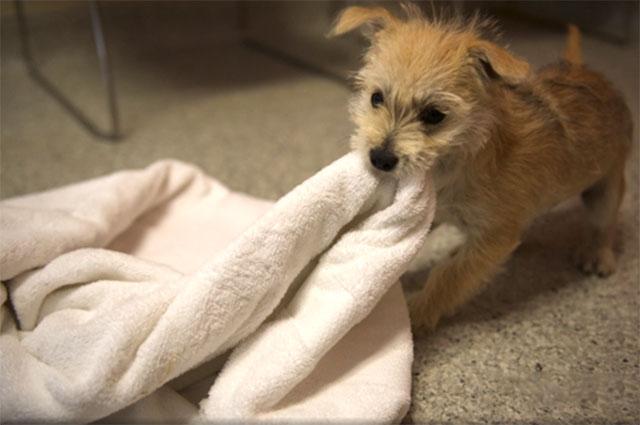 Cachorro rescatado jugando
