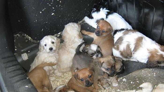 Cachorros transportados en un ferry