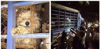 Cerca de 400 animales con destino al festival de Yulin fueron salvados