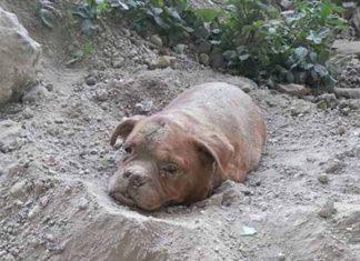 Condenado por enterrar viva a su perra