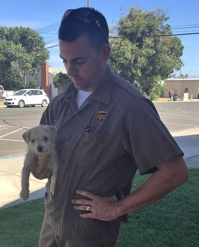 Conductor de UPS salva a un cachorro