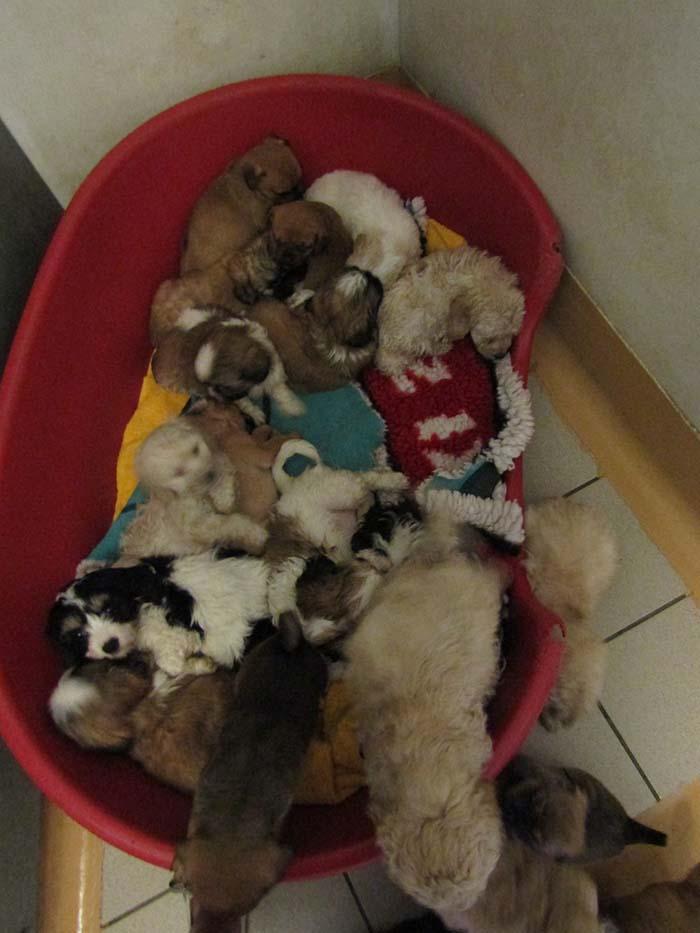 Decenas de cachorros rescatados