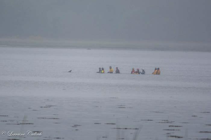 Devolvieron a un delfin al agua