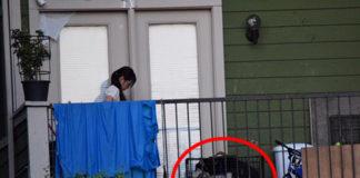 Ella trata de salvar a un perro y pide ayuda en Facebook