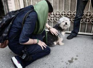 En Irán confiscan los perros