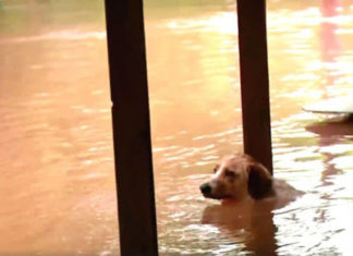 Equipo de noticias salva a un perro en una inundacion
