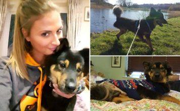 Gasta más de 18.000 mil dolares para salvar a su perro rescatado