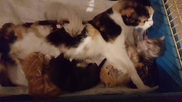 Gata y sus bebés