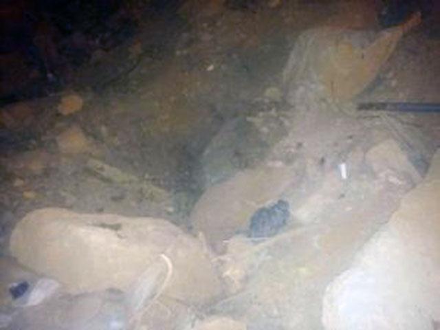 Gatita sepultada debajo de escombros