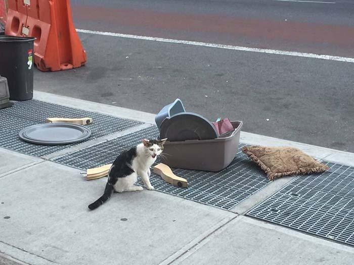 Gato abandonado en una calle