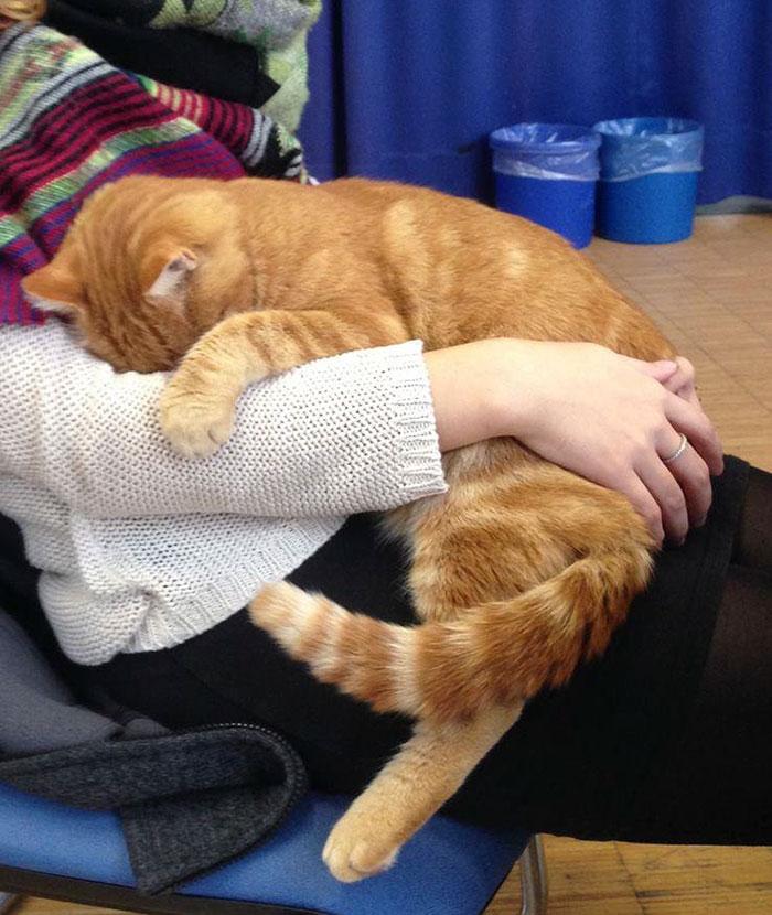 Gato abraza estudiantes