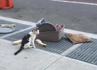 Gato fue abandonado en New York