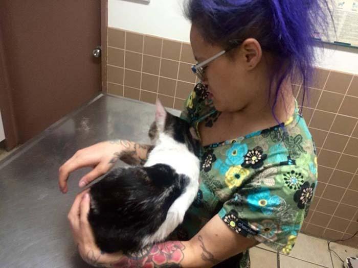 Gato fue rescatado