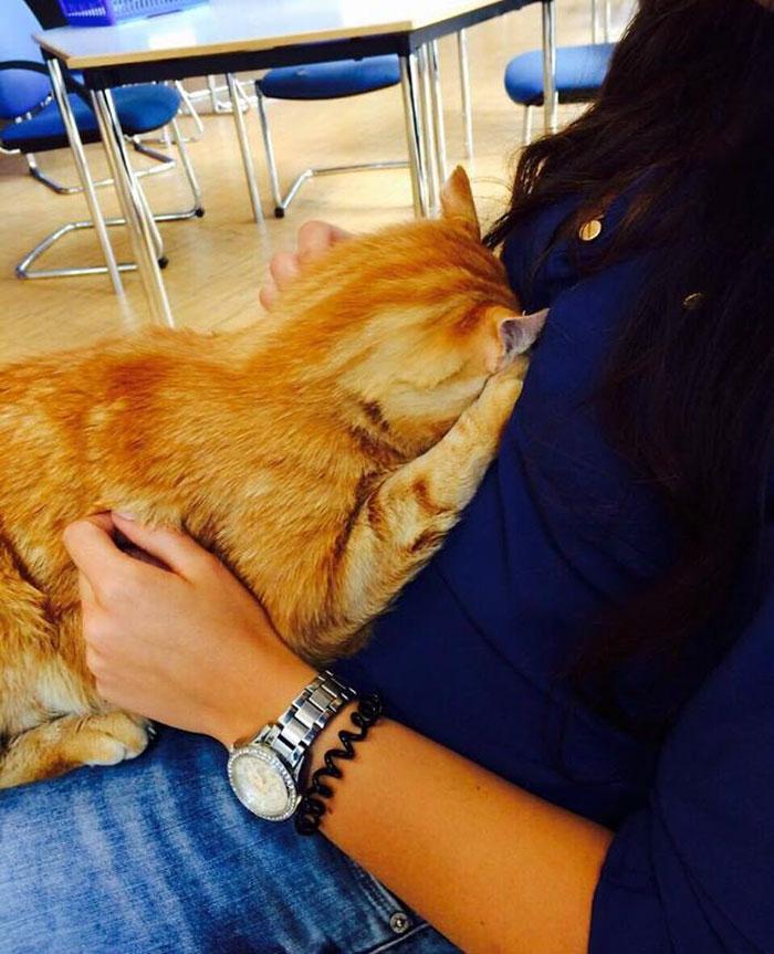 Gato reconforta estudiantes