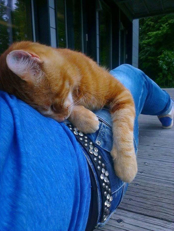 Gato recostado en estudiante