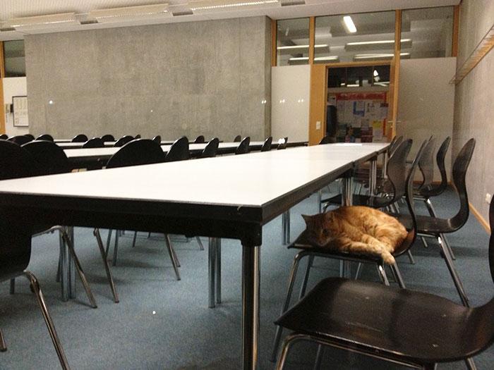 Gato va a diario a la universidad