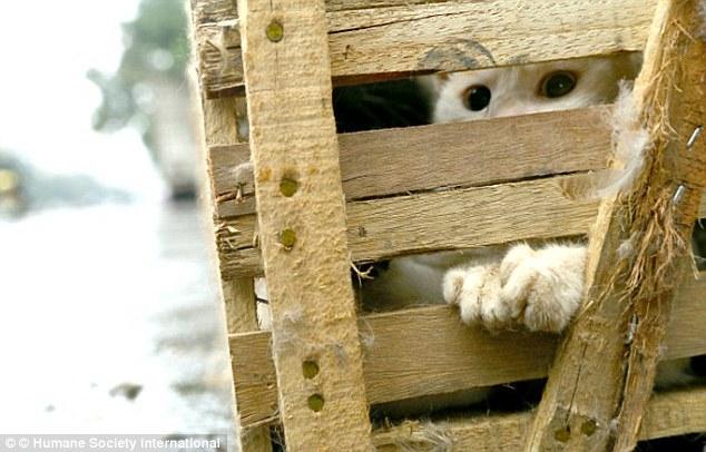 Gatos enjaulados