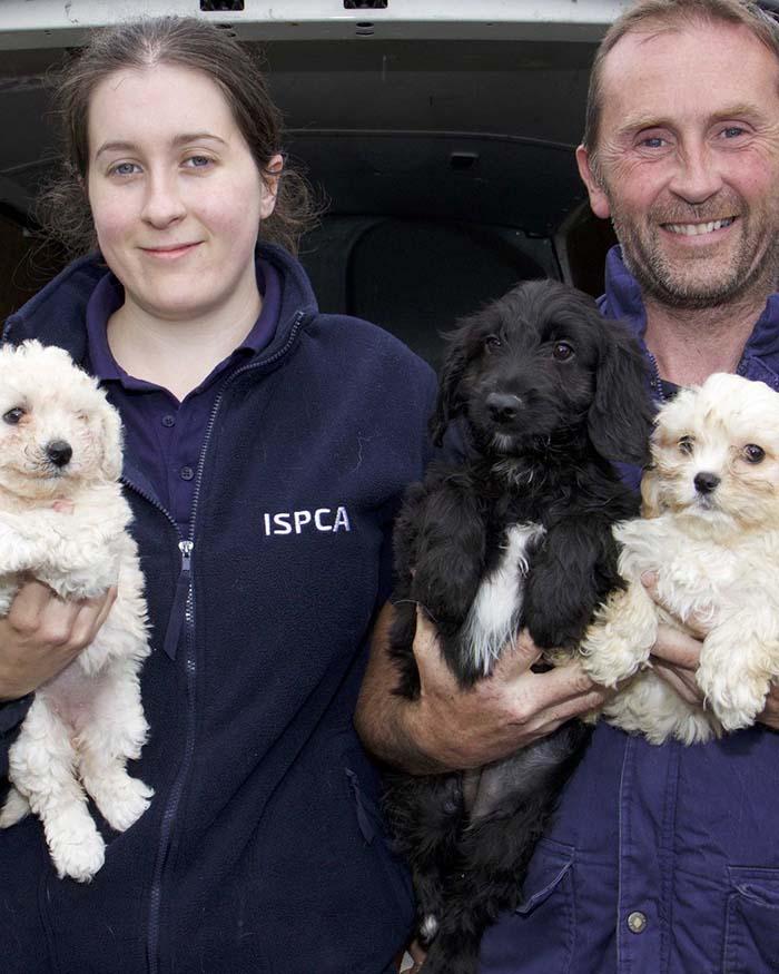 ISPCA y cachorros