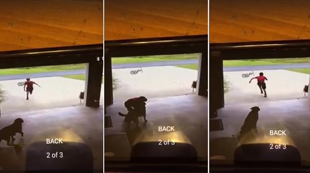 Niño se cuela en el garaje del vecino para dar un abrazo al perro y luego se va