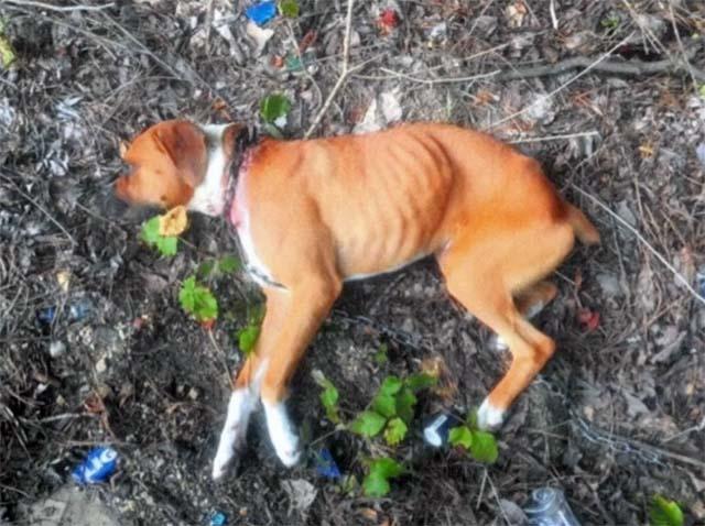 Perro abandonado en una zanja