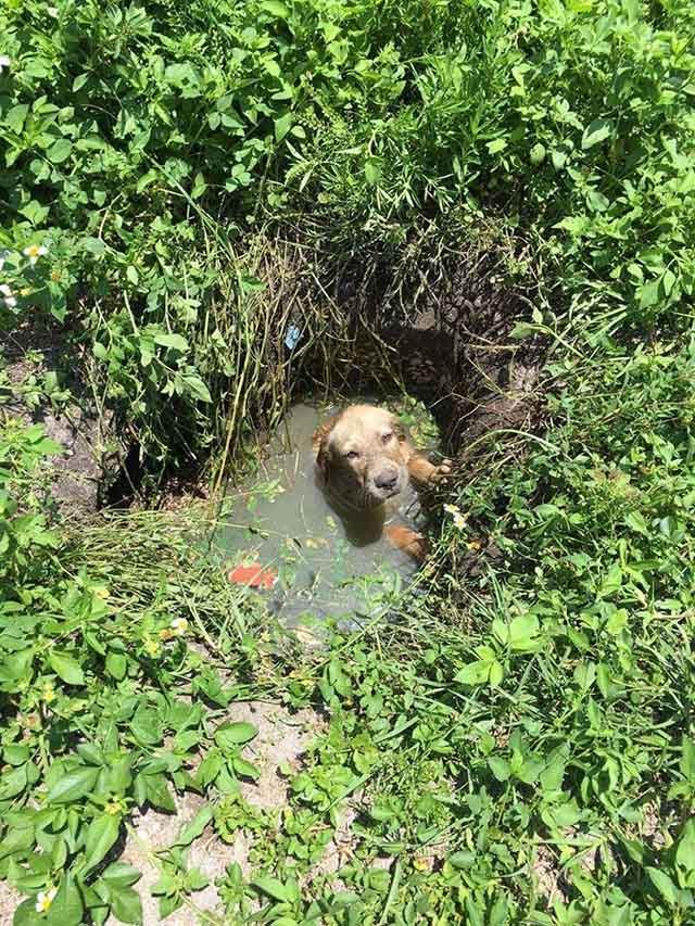 Perro cayo a un pozo