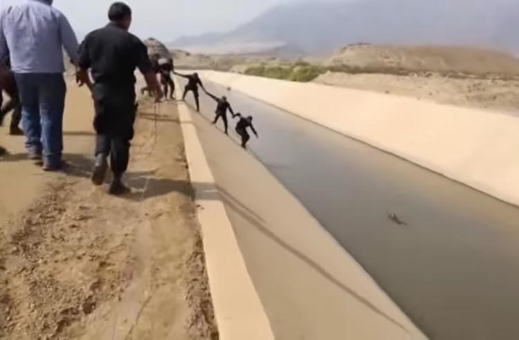 Perro en el canal