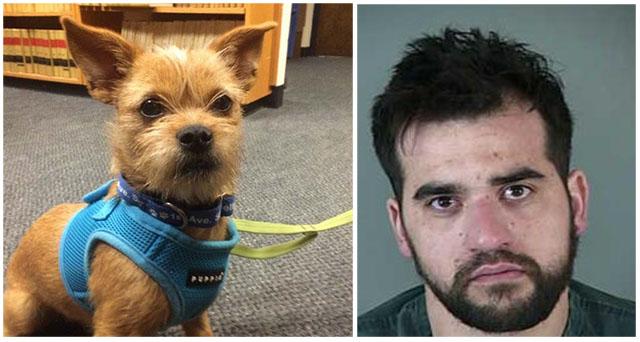Perro gravemente maltratado es adoptado por el oficial que lo salvó
