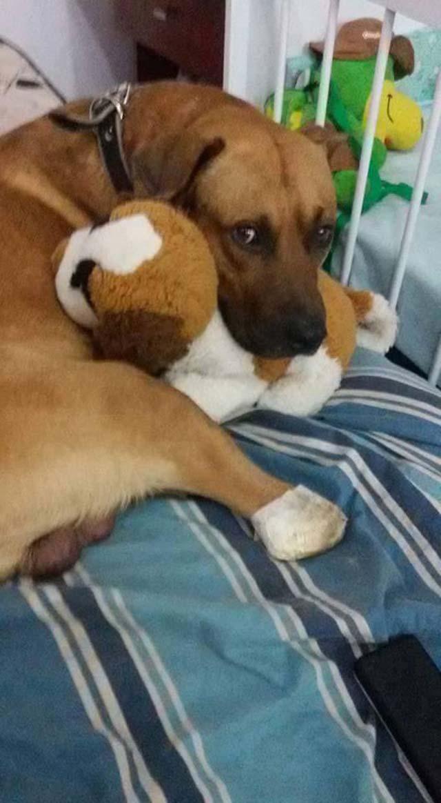 Perro maltratado ahora es feliz