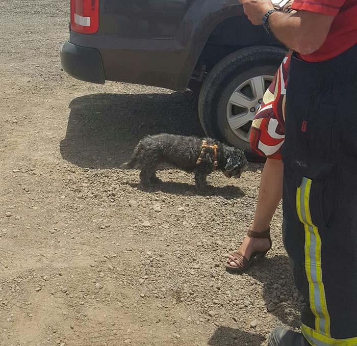 Perro rescatado de un auto caliente
